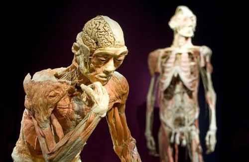 Human Body_2